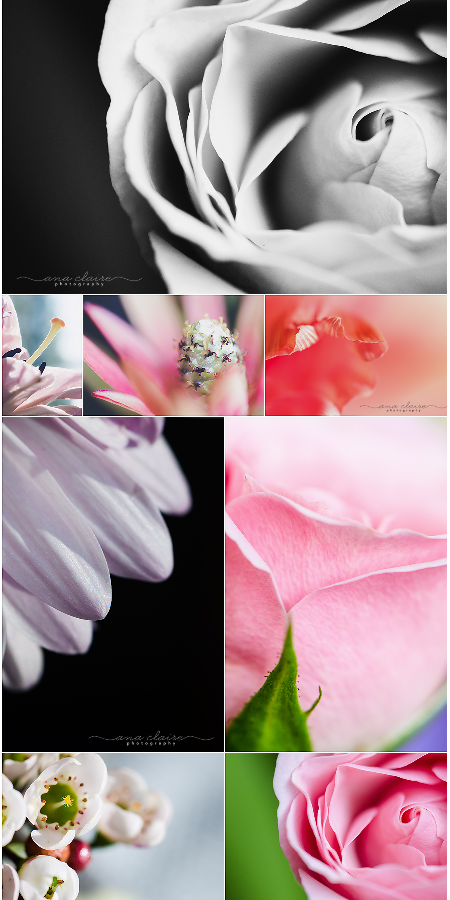 macro photography, macro flowers, sturgeon bay photography