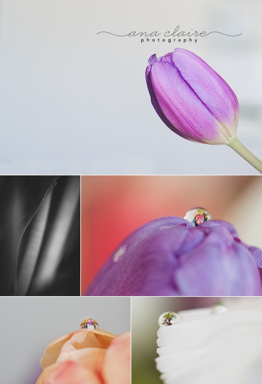 refraction, nature, tulips